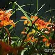 Orange Natural Beauty...   # Art Print