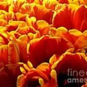 Orange Sea Art Print