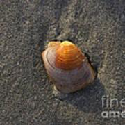 Orange Seashell Art Print