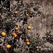 Orange Tree On Rustic Background Art Print