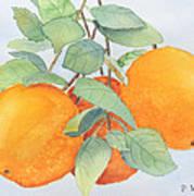 Orange Trio Art Print