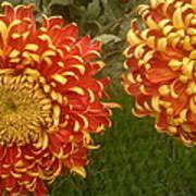 Orange-yellow Chrysanthemums Art Print