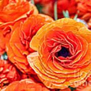 Orange You Happy Ranunculus Flowers By Diana Sainz Art Print