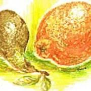 Oranges And Pears Art Print