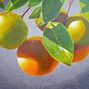 Oranges Art Print by Carey Chen