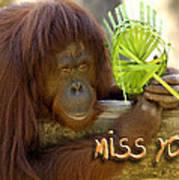 Orangutan Female Art Print