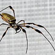 Orb Spider 4 Art Print