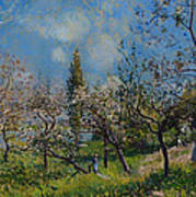 Orchard In Spring Art Print