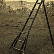 Orchard Ladder Art Print