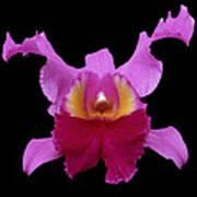 Orchid 002 Art Print