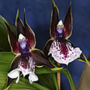 Orchid 1 Art Print