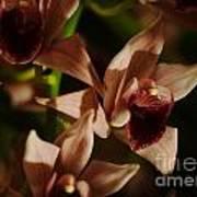 Orchid 137 Art Print