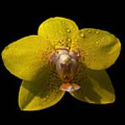 Orchid 15 Art Print