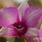 Orchid 152 Art Print
