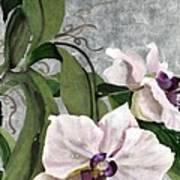 Orchid A - Phalaenopsis Art Print