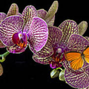 Orchid And Orange Butterfly Art Print