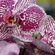 Orchid Art Art Print