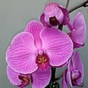 Orchid Beauty Art Print