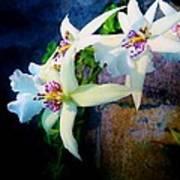 Orchid Cascade Art Print