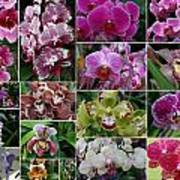 Orchid Collage 1 Art Print