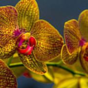 Orchid Color Art Print