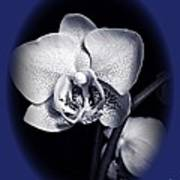 Orchid Elegance 2 Art Print