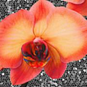 Orchid Explosion Art Print