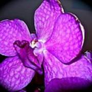 Orchid From Art Gallery Art Print
