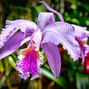 Orchid Life Art Print