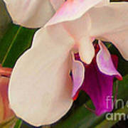 Orchid One Art Print