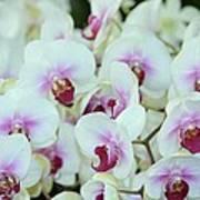 Orchid Sea Art Print
