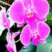 Orchid Series 1 Art Print