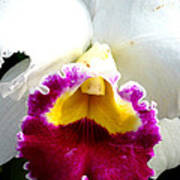 Orchid Series 2 Art Print