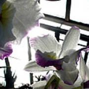 Orchid Series 4 Art Print