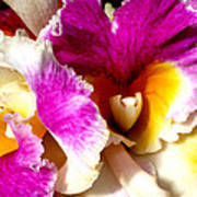 Orchid Series 6 Art Print