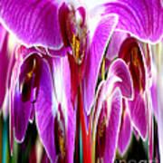 Orchid Splat Art Print