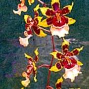 Orchid Spray By Pottery  Art Print
