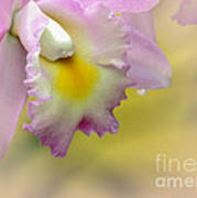 Orchid Whisper Art Print