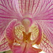 Orchid You Happy Art Print