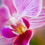 Orchide Detail 2 Art Print by Kim Lagerhem