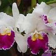Orchids 198 Art Print