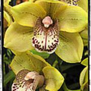 Orchids  9 Art Print