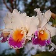 Orchid Elsie Sloan Art Print