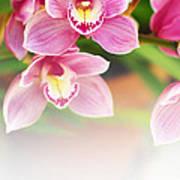 Orchids Art Print by Carlos Caetano