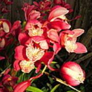 Orchids Galore Art Print