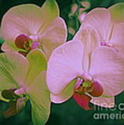 Orchids In Pink And Green Art Print