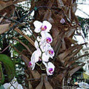 Orchids In The Opryland Hotel In Nashville Tennessee Art Print