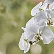 Orchids Art Print by Karen Walzer