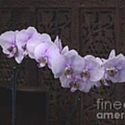 Orchids Loretta Art Print