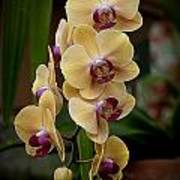 Orchids Pictures 10 Art Print